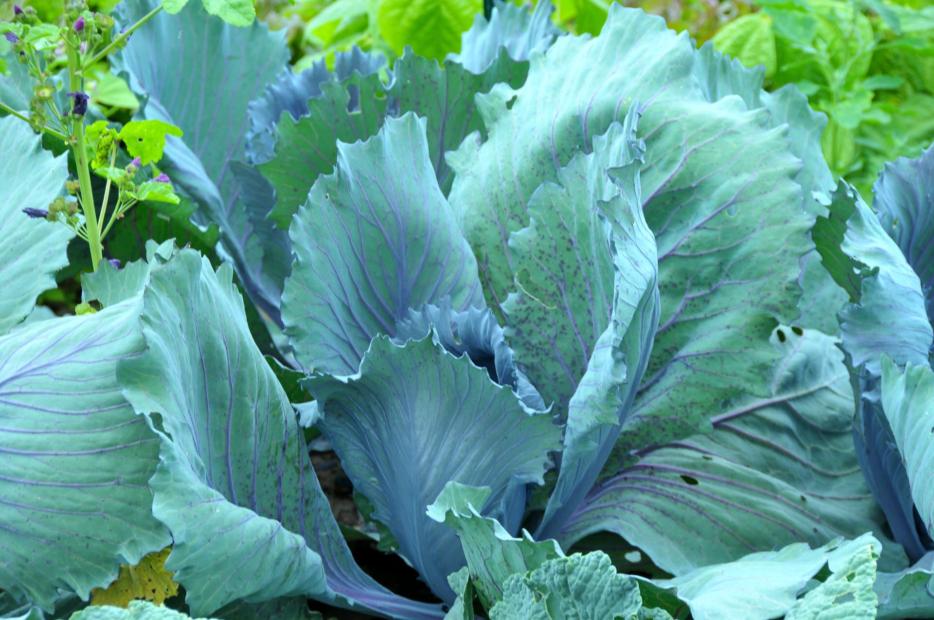 Bio-Landwirtschaft